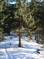 ... über einen bewaldeten Bergrücken empor ...