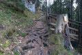 … kofferten wir den zum Teil extrem wurzeligen Wanderpfad durch den Ahorn- und Saugraben nach oben.