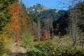 Noch ein einziges Mal verharrte ich kurz und schenkte dem mit Lawinenverbauungen gespicktem Wiesenhang des Lahnerkogels einen letzten Blick, bevor …