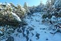 Wir wühlten uns durch eine ca. 10cm dicke Schneedecke und durch sehr gut ausgeholzte Latschengassen unserem ersten Gipfelziel des heutigen Tages immer näher.