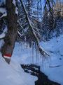 ... relativ schnell die verschneite Forstraße Richtung Tiergartenalm entlang.