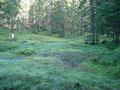 ... durch den Moorwald zur Wurzerhöhe
