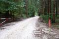 Vom Parkplatz der Taferlklause folgten Gabi und ich zunächst links des Sees der leicht ansteigenden Schotterstraße durch den Wald.