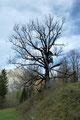 """Ob Jägerstand, skurrile """"Baum""""-Gestalten  oder ähnliches - entlang des Weges gab es genügend zu bestaunen."""