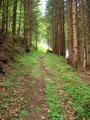… links dem Waldpfad bergwärts folgend.