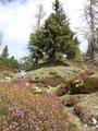 Eine wunderschöne Alpenflora/fauna begleitete uns die nächsten Meter.