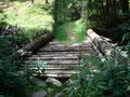 Über eine kleine nicht sehr stabile Holzbrücke ging meine Wanderung immer weiter und weiter durch das Blätterdach.