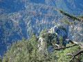 Bevor wir wieder zur Weggabelung Mahdlgupf / Schoberstein kamen, konnten wir nochmals einen Blick auf das Gipfelkreuz des Schobersteins werfen.