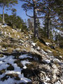 ... und marschierte dann den Weg weiter Richtung Gipfel.