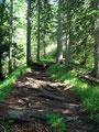 … folgten anschließend dem wurzeligen Steig Richtung Ennstaler Hütte bergwärts.