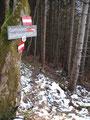 Das kurze Stück der Forststraße entlang und gleich wieder durch den Wald in Richtung der Blaulucke.