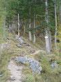 Nun führte der Weg Nr. 209/216, den Waldkamm steil in Serpentinen hinauf und ...