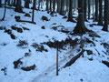 Wieder querte ich die Forststraße und weiter ging der Steig moderat und gleichmäßig bergwärts. Da auch dieser Weg relativ stark frequentiert war, war er sehr, sehr eisig. Vorsicht bei jedem Tritt war angesagt!
