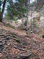 In unzähligen Serpentinen schraubte sich der Steig durch den Wald weiter bergwärts.
