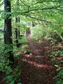 Nur mäßig ansteigend gings den Wandersteig den Bergwald empor.