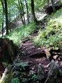"""... erreichten wir den nächsten Abschnitt unserer """"Sparber Besteigung"""". Anfangs noch im steilen Bergwald unterwegs ..."""