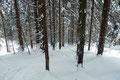 """… starteten  anschließend den 2. Durchgang des """"Fichtenslalom"""" durch den Hochwald abwärts zur …"""