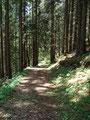 … wiederum in den Wald hinein.