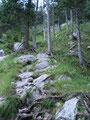 Fortan ging es weiter auf einem von Wurzeln und Felsen übersäten Bergsteig, …