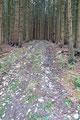 Links gegenüber der Hütte leitete ein Karrenweg durch dichten Wald zum Kienesberg-Gipfel. Für mich war ein Gipfelbesuch natürlich PFLICHT!