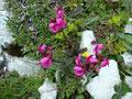 Nach einer ausgiebigen Rastpause in der Mittagssonne währendessen ich diese für mich unbekannte Pflanze ablichtete weil sie so schön aussah ...