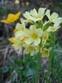 Ein paar Eindrücke der Flora in diesem Gebiet ........