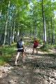 Abrupt drehte sich der Waldpfad in einer 145° Kehre nach NO einem breiten wurzeligen mäßig ansteigenden Rücken zu,  …
