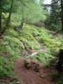 Durch den Lärchenwald und …