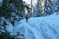 Das freie und sonnige Gelände der Goseritzalm hinter uns gelassen, tauchten wir erneut in das schattige steile Waldstück ein und …