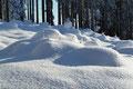Wie kleine Antennen ragten die Wipfel der Jungbäume aus den Wogen des Schneemeeres. Einfach herrlich!