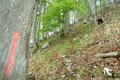 Anschließend folgten wir den markierten Steigspuren in weiten Serpentinen durch das maigrüne Blätterdach weiter höher.