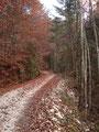 Immer noch schlängelte sich die Forststraße bergwärts und ich folgte dieser weiter.