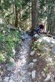 ... tauchten wir, wie scho so oft am heutigen Tage, wieder in ein Waldstück ein.