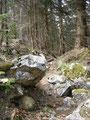 In der Nähe des höchsten Punktes des Farnaugupfes wurde der Boden erdiger und steiniger ...