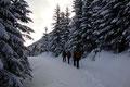 Im weiteren Verlauf leitete die schneebedeckte Forststraße flach nach links …