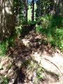 … tauchten wieder in den Wald ein. Über Wurzeln folgten wir dem Steig bergwärts.