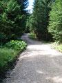 Jedoch folgte ich der Forststraße schnellen Schrittes weiter bergwärts.
