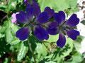 Immer wieder waren solch wunderschönen Blumen am Wegesrand zu bestaunen.