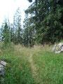 Noch ein paar Meter durch größtenteils unberührte Natur ...