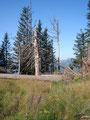 Von Zeit zu Zeit lagen immer wieder mal umgestürzte Baume über den Weg, es war jedoch kein Problem diese zu umgehen oder einfach unten drunter durch zu marschieren.