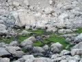 Einfach Fantastisch! Alles nur Stein und dann, dieses grüne paradiesische Fleckerl.