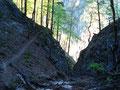 Von hier unten folgte ich dem Steig wieder in Serpentinen durch einen Buchenwald aufwährts