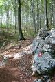 …gut ausgetretenen breiten Forstweg Richtung höchsten Punkt Istriens entlang. Der mit einem weißen Punkt mit roter Umrandung gut markierte Weg wandelte sich zunehmend zu einem Pfad.