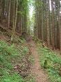 … schon wieder tauchte ich in den Wald ein.
