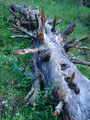 Am Wegesrand immer wieder solch tolle, skurille Gebilde, wie dieser Baumstamm. Der war einfach ein Bildchen wert!