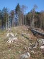 Da der Waldsee aber auf 1064m lag, stand ein kurzer Abstieg bevor.