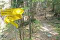 Fast geradlinig wird diese gequert und fortan folgte ich einem Waldpfad entlang, …