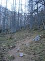 Immer weiter folgten wir dem Weg 878 in das, im unteren Bereich bewaldete Kar …