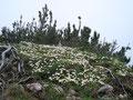 Zu bestaunen gab genug entlang des Weges. Echt eine tolle Bergflora hier oben.