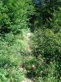Anfangs durch sehr hohes Gras und Gestüb hindurch ...